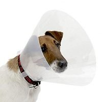 RECOVERY DOG COLLAR