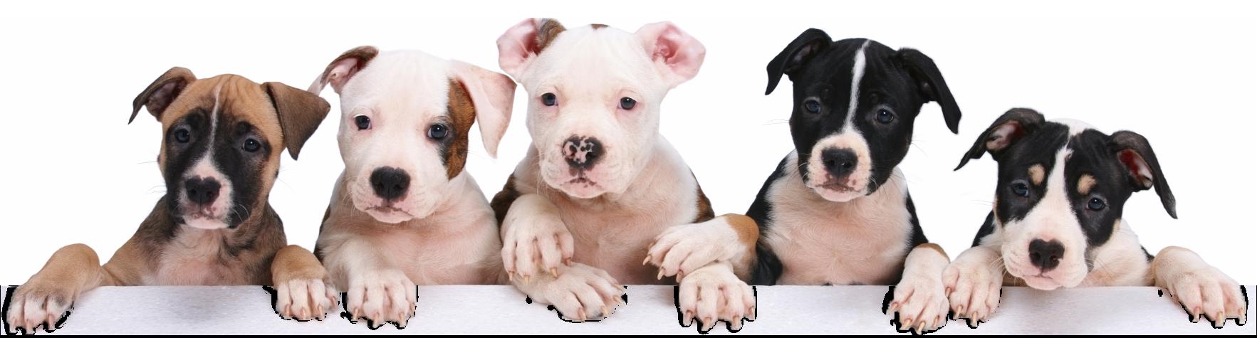 Petland Chicago Ridge Puppy Package Value
