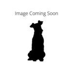 Petland Chicago Ridge Redbone Coonhound